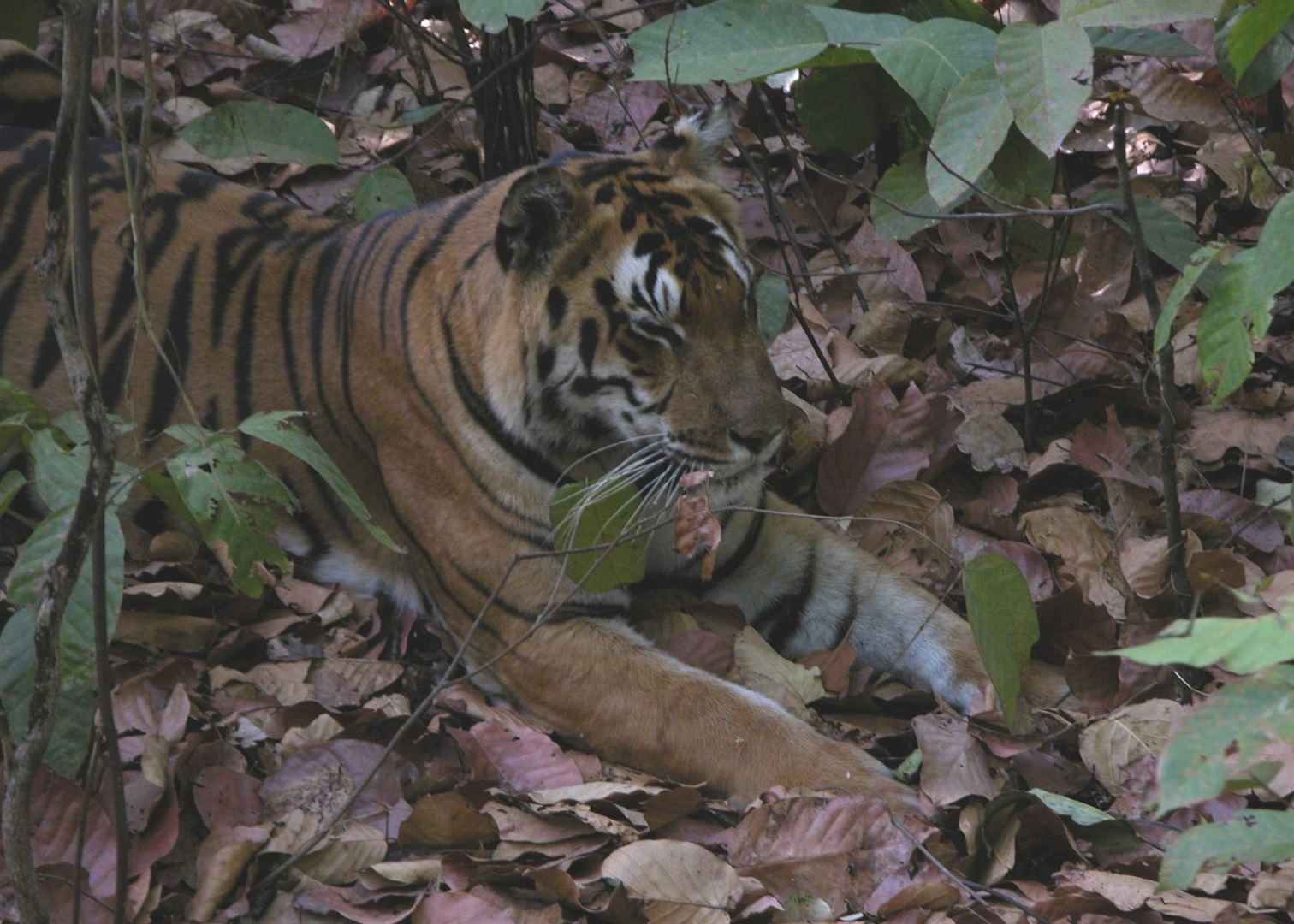 corbett tiger reserve Jim corbett national park is a part of the bigger corbett tiger reserve, situated in the foothills of the grand himalayas in the nainital district of uttarakhand.