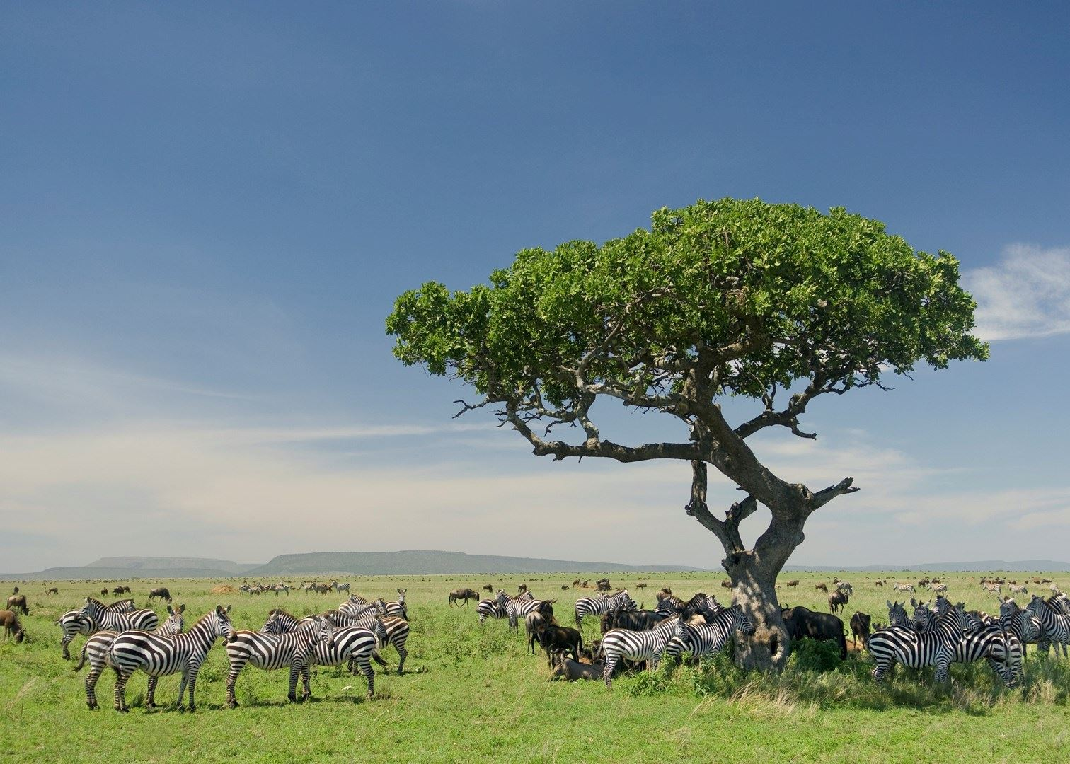Visit Serengeti National Park, Tanzania | Audley Travel