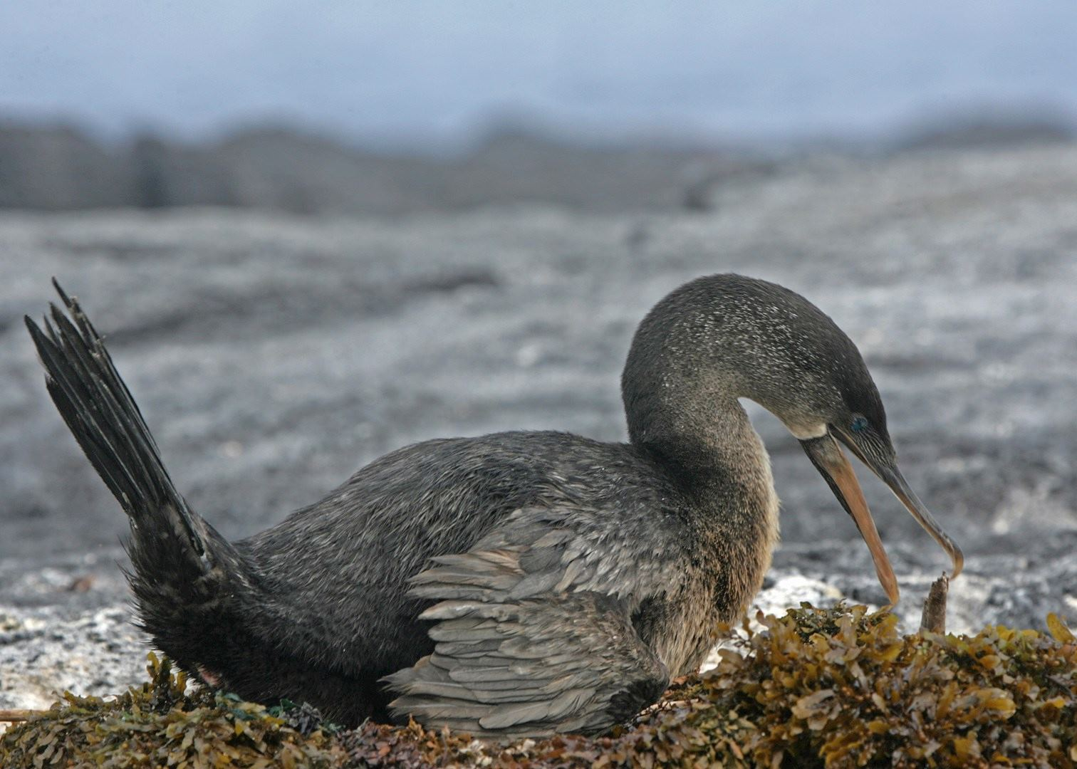 Tailor Made Holidays To The Galapagos Islands Audley Travel