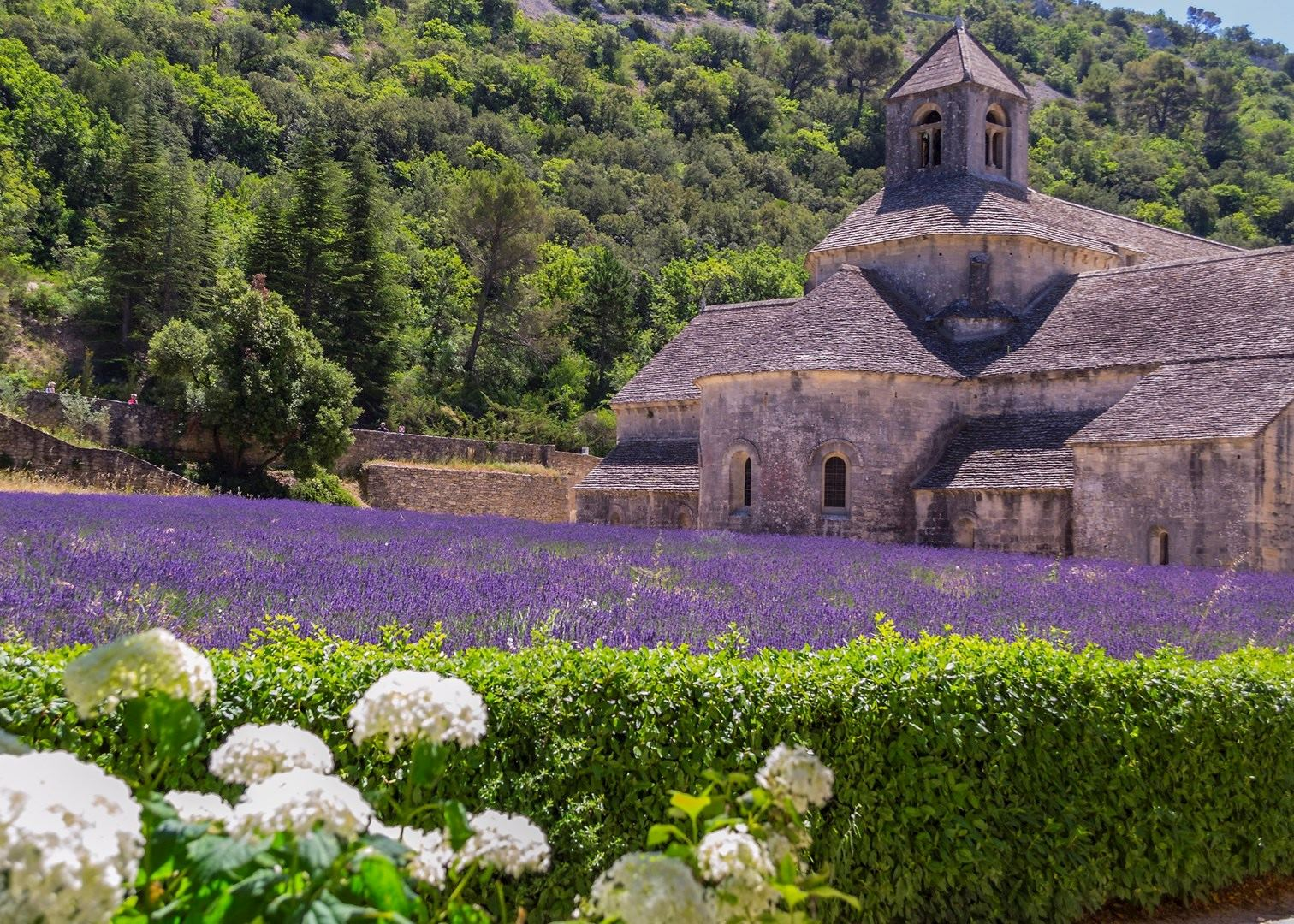 lavender fields at abbaye de s nanque les bories and gordes village audley travel. Black Bedroom Furniture Sets. Home Design Ideas