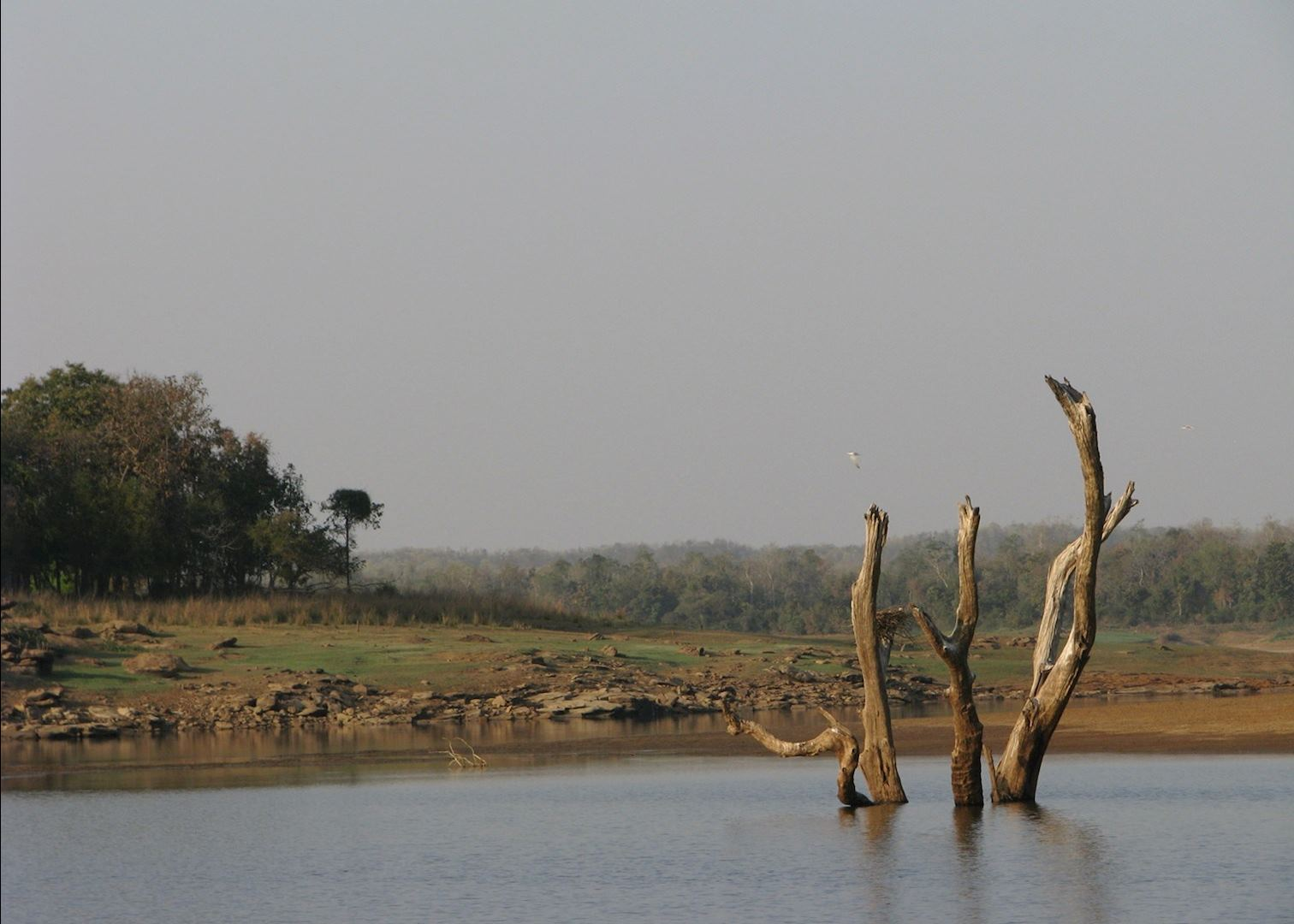 satpura national park Plan to visit satpura national park, india get details of location, timings and contact find the reviews and ratings to know better.