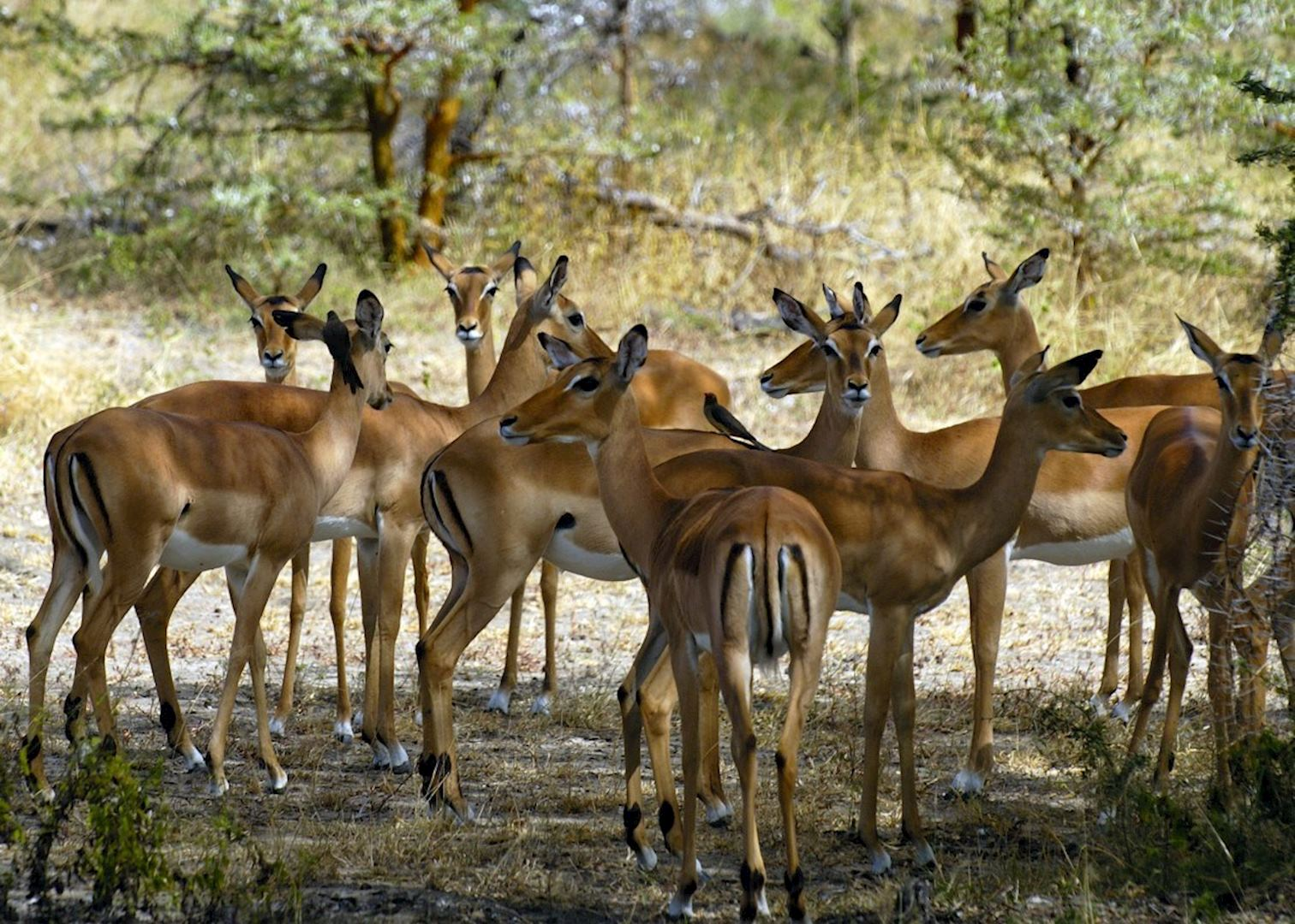 Image result for selous game reserve