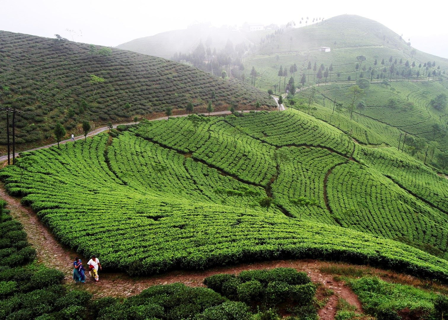 Visit Darjeeling on a trip to India | Audley Travel