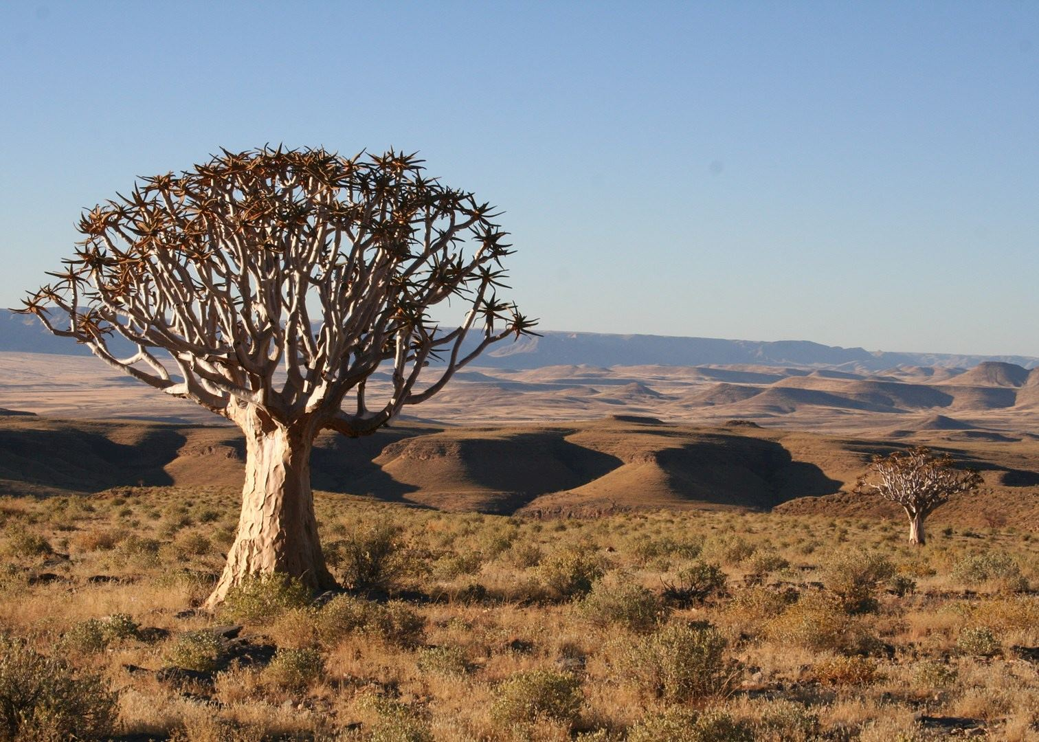 World S Most Unusual Plants And Trees Audley Travel