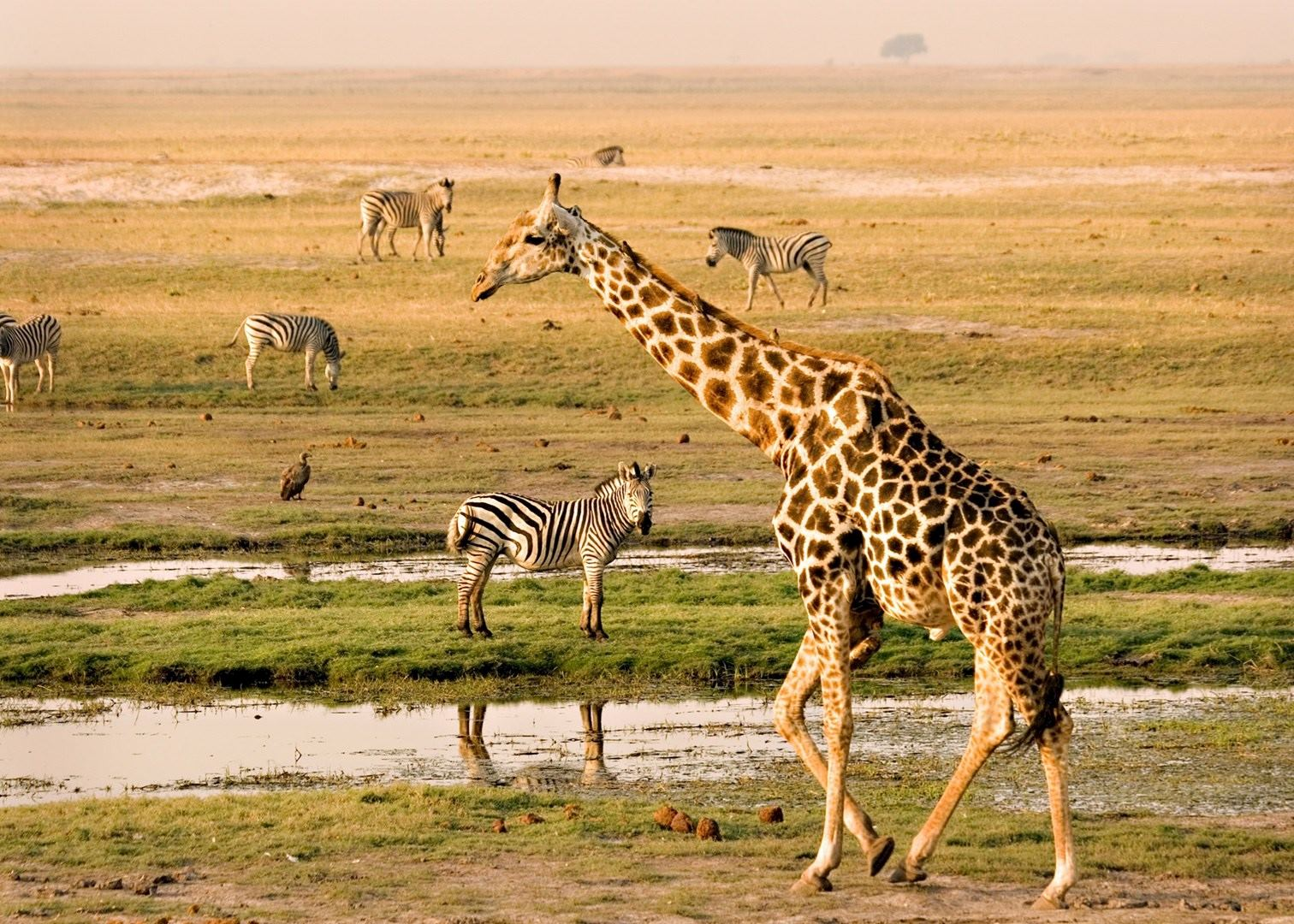 Visit Chobe River Front On A Trip To Namibia Audley Travel - Chobe river