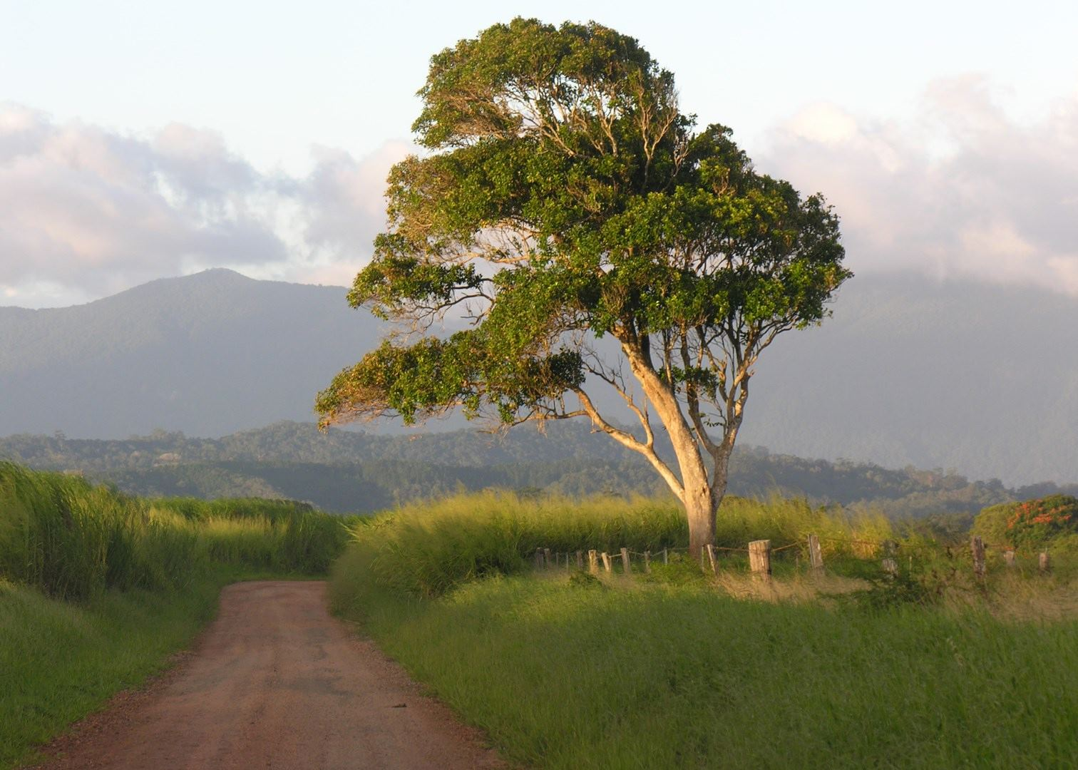 Visit atherton tablelands in australia audley travel for The atherton