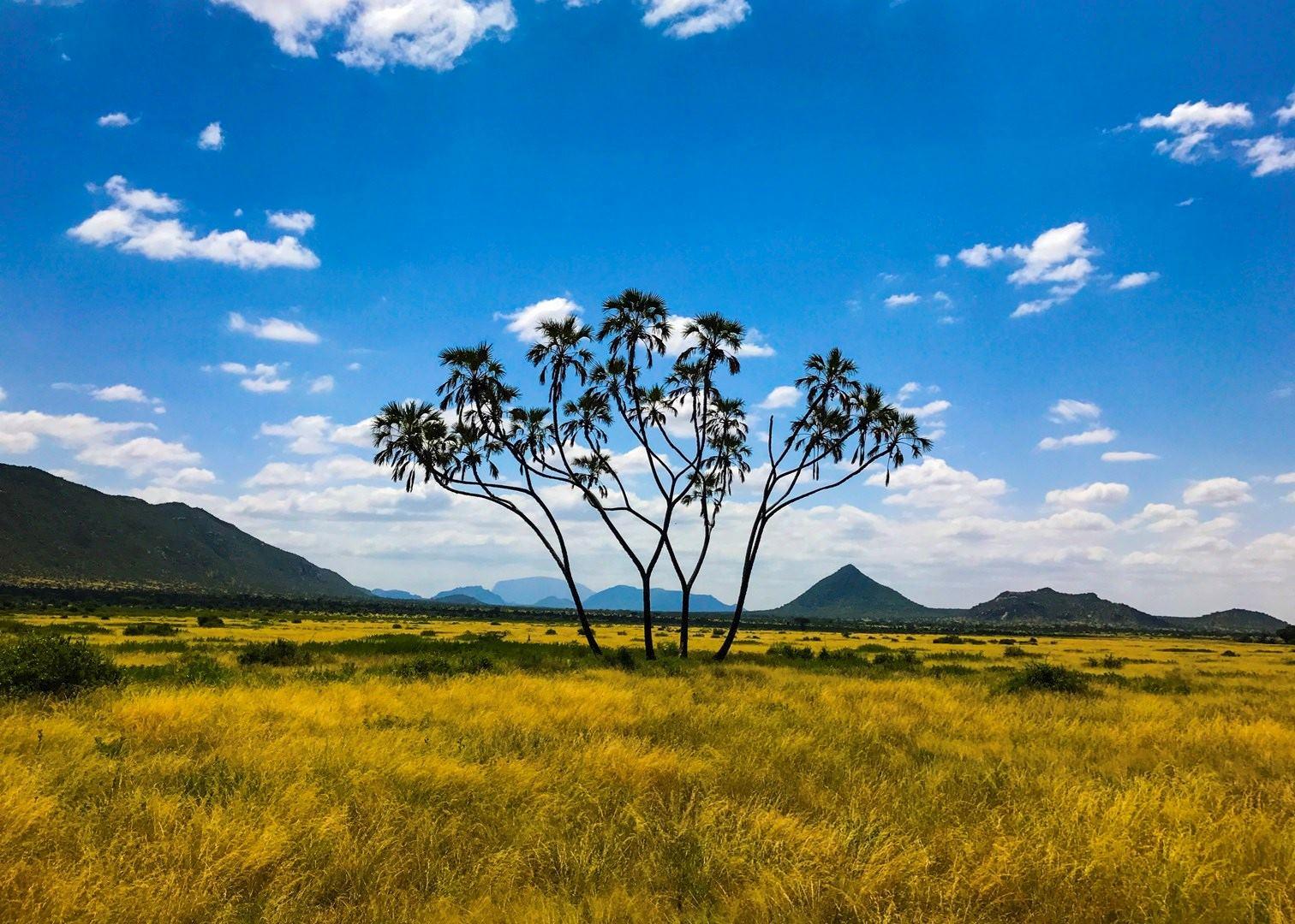 Visit Samburu National Reserve In Kenya