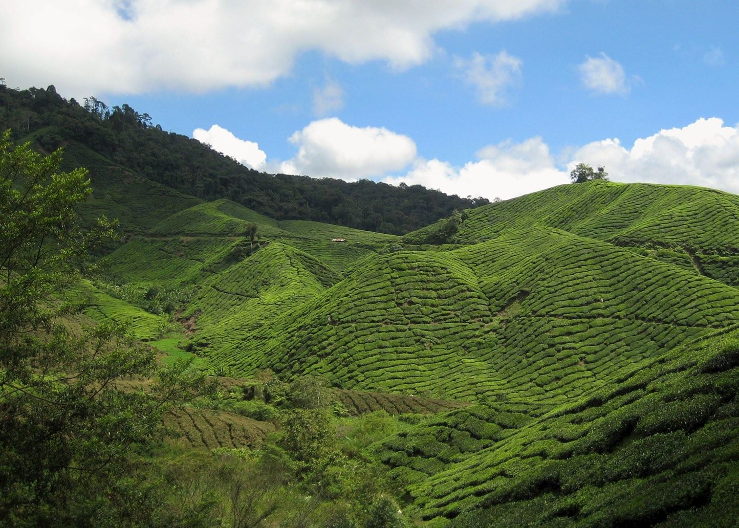 Visit Cameron Highlands On A Trip To Malaysia Audley Travel