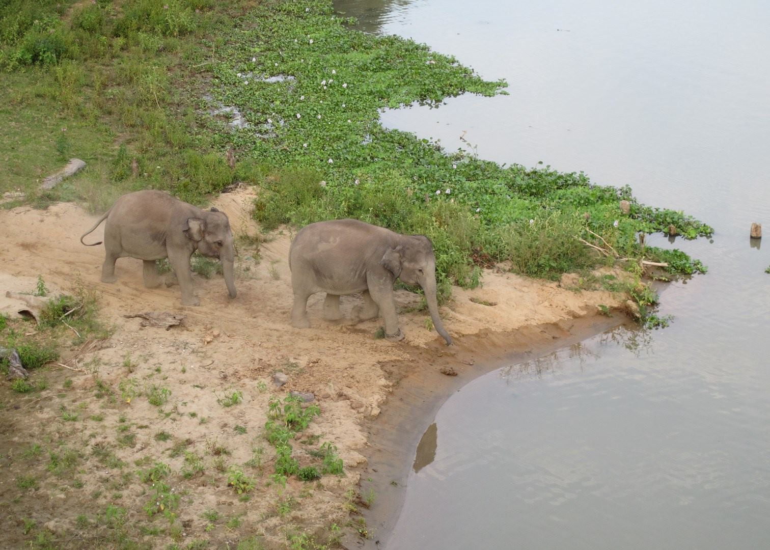 Kaziranga India  City new picture : Visit Kaziranga National Park in India | Audley Travel