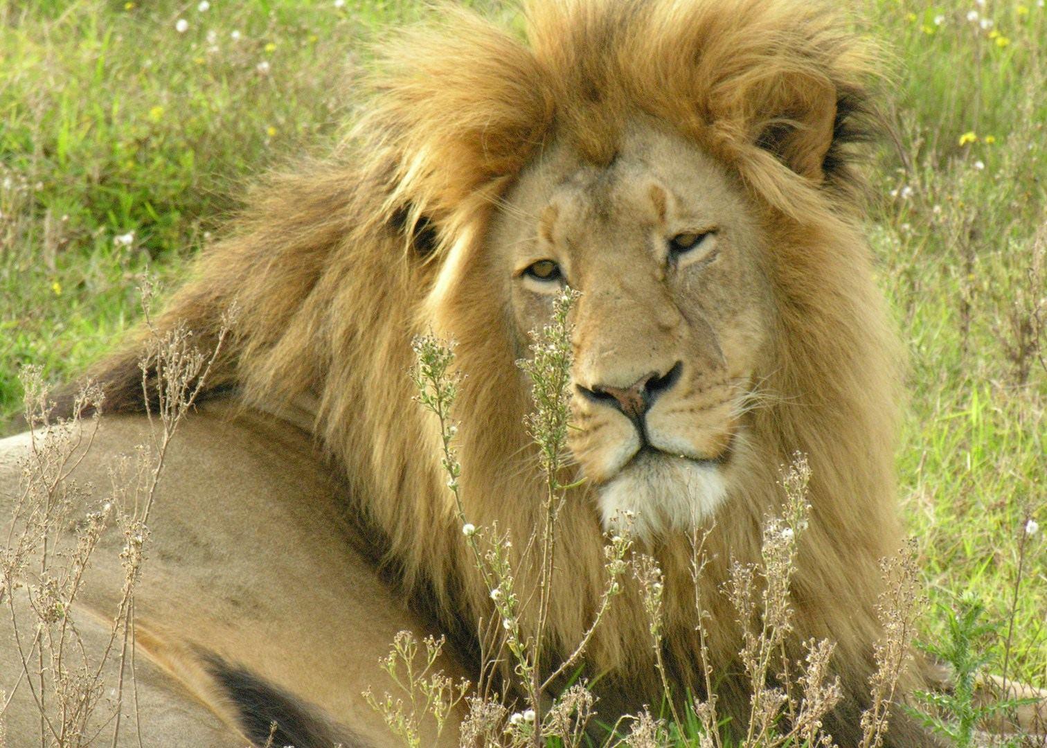 visit kruger national park  south africa
