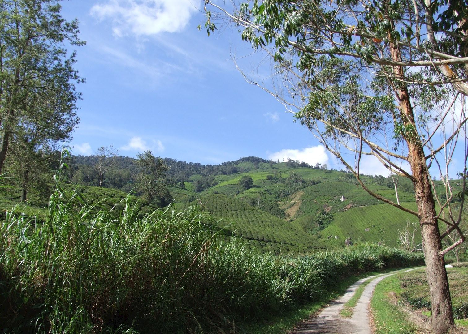 class trip to cameron highland essay Compare and contrast essay that i always choose my vacation at cameron highland because of the place you decide to choose for your vacation trip.