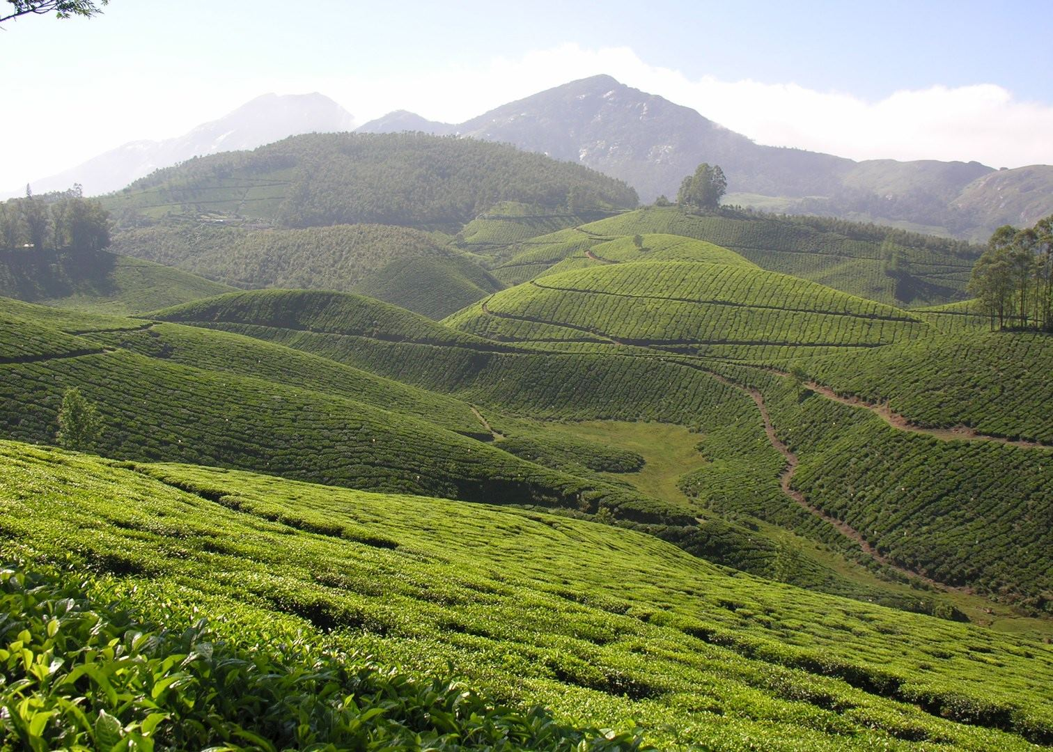 Munnar India  city pictures gallery : Munnar, India
