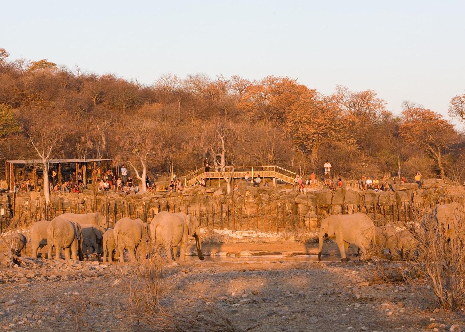 Skeleton Coast Namibia >> Halali Rest Camp | Etosha National Park | Audley Travel