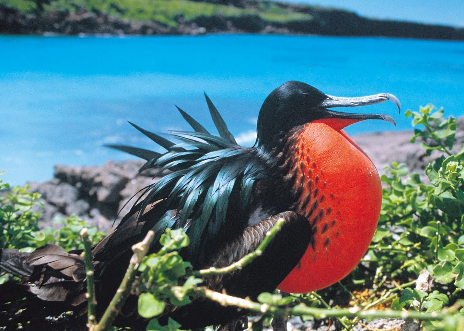 Wildlife Of Ecuador Amazon And Galapagos Audley Travel