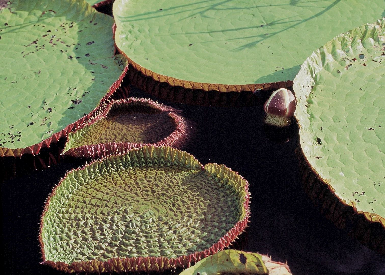 Visit The Amazon Rainforest in Brazil | Audley Travel