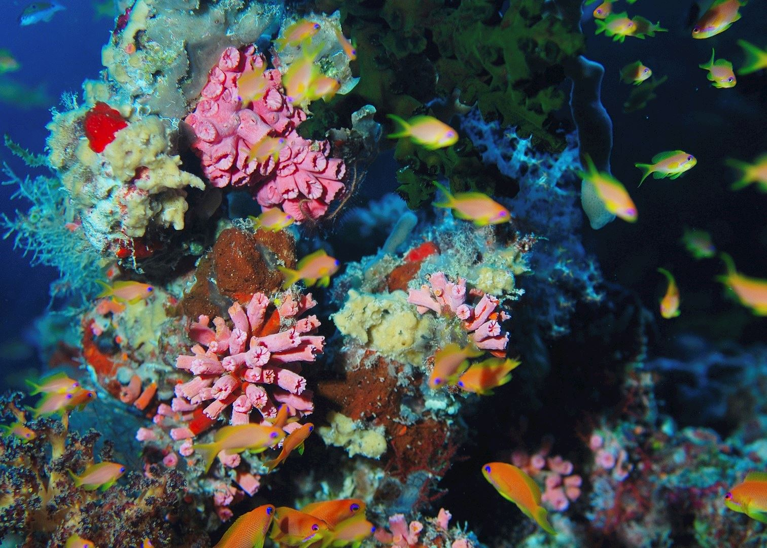 The best coral reefs in the world | Blog 2017 | Audley Travel