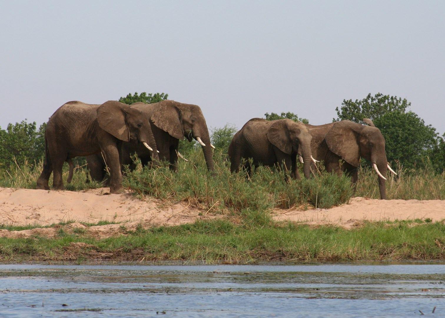 Zambia ( Lower Zambezi ) -