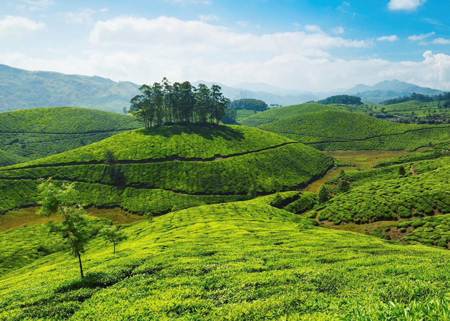 Visit Munnar on a trip to India | Audley Travel