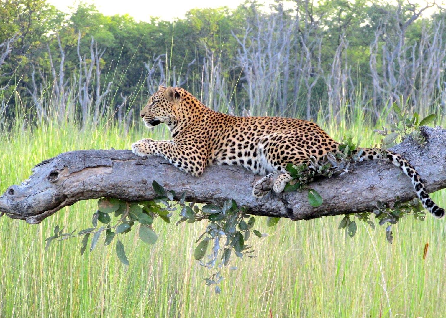 The Best Time To Visit Botswana & Essential Travel Tips ...