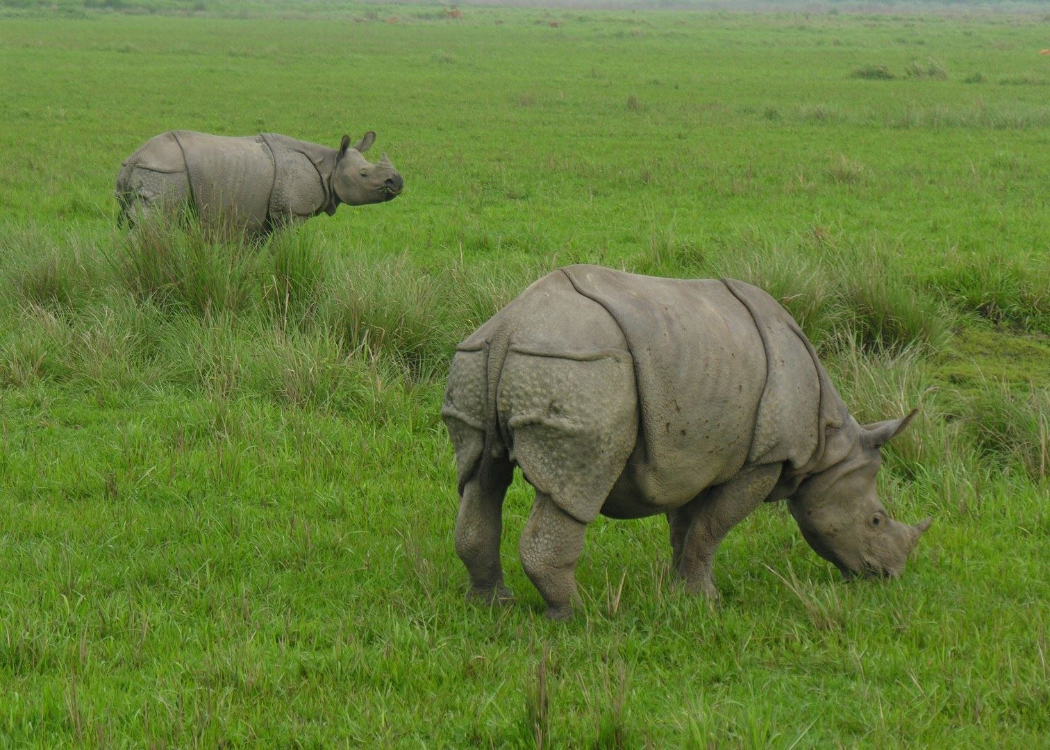 Kaziranga India  City pictures : Visit Kaziranga National Park in India | Audley Travel