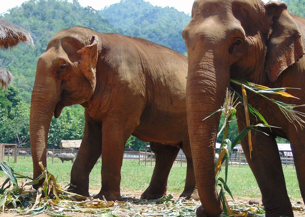 Day trip to the Elephant Nature Foundation, Chiang Mai
