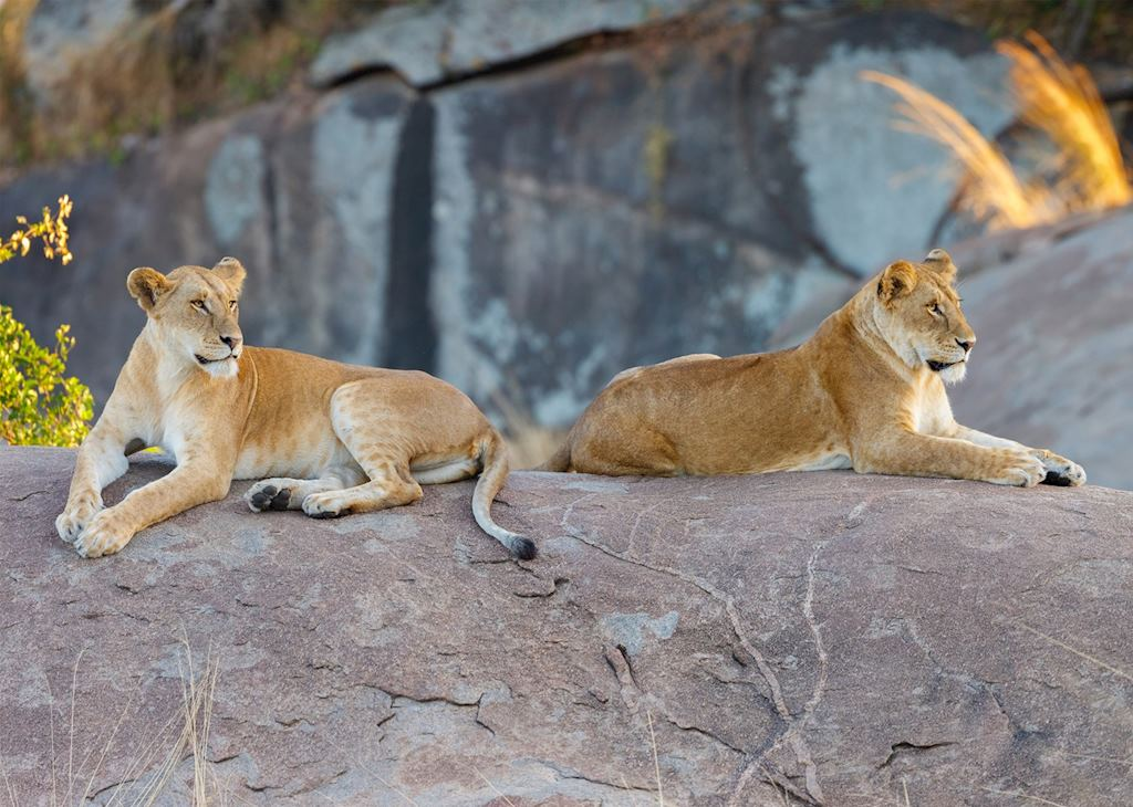 Lioness lounging on a kopje in the Serengeti