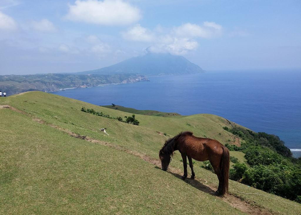 Horse grazing on Batan Island