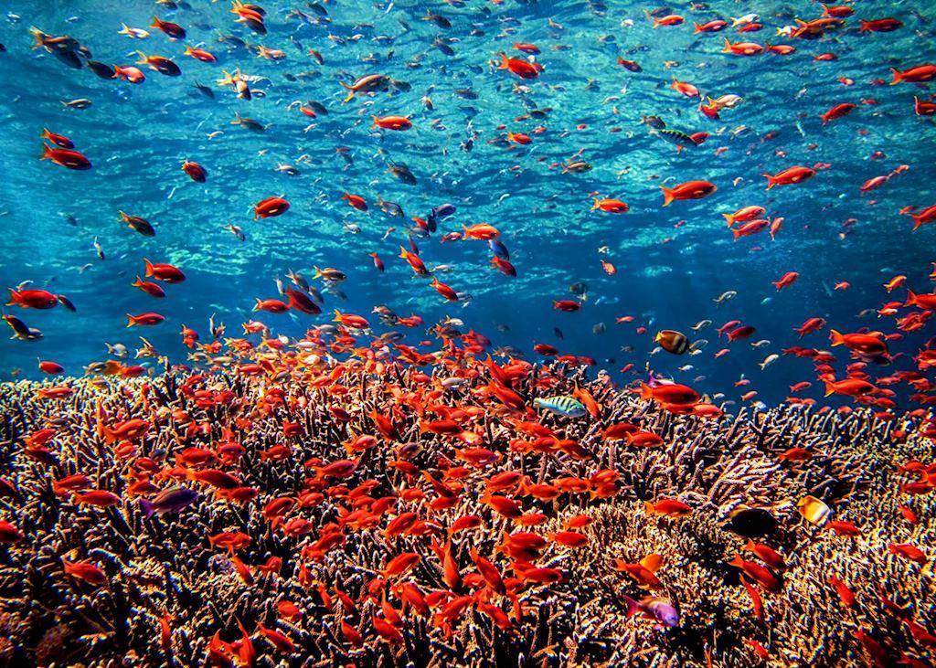 Marine life, Bali