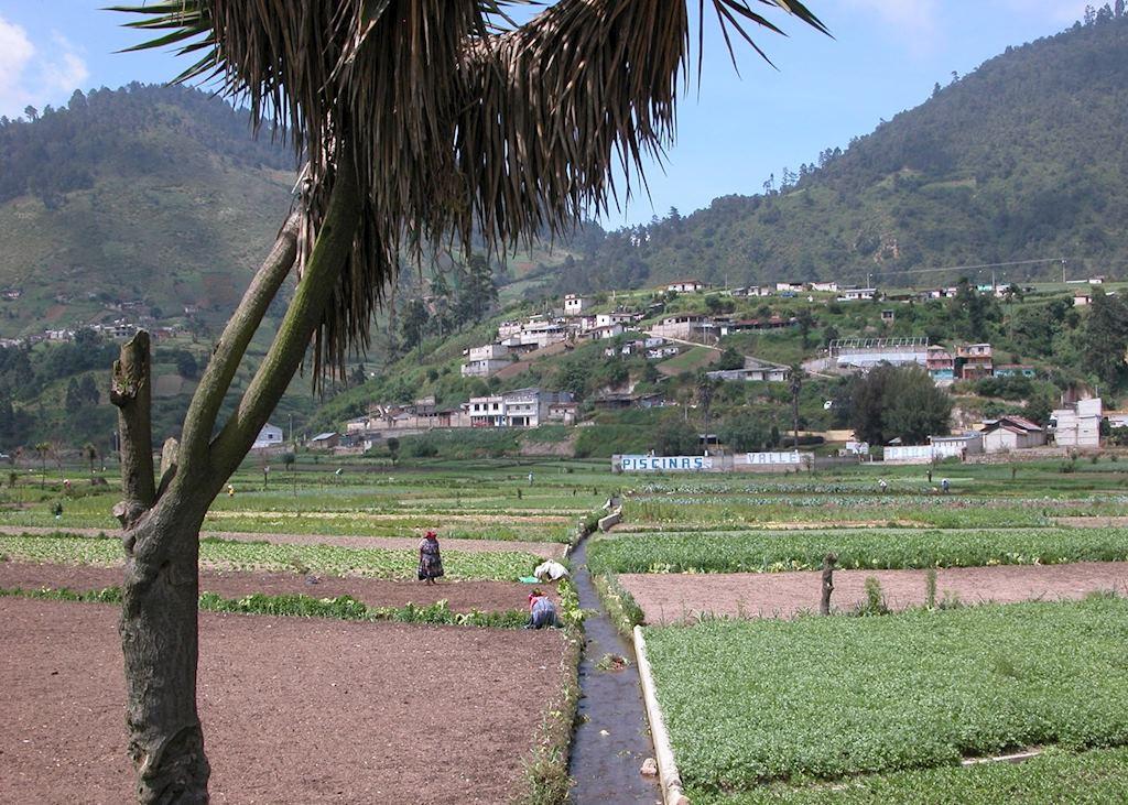 Fertile Highlands, near Quetzaltenango