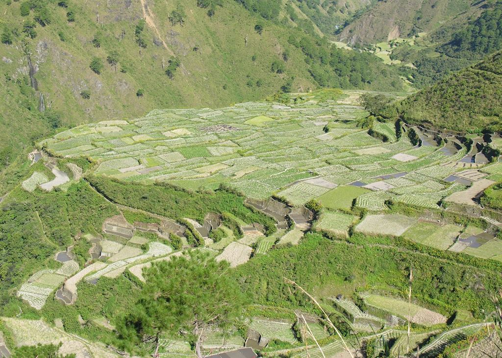 Rice and vegetable terraces near Bontoc, Mountain Province, Luzon