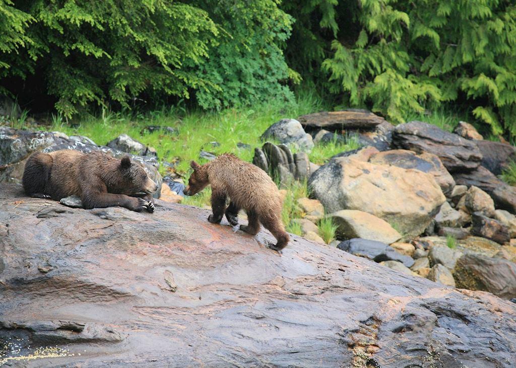 Bears, Prince Rupert