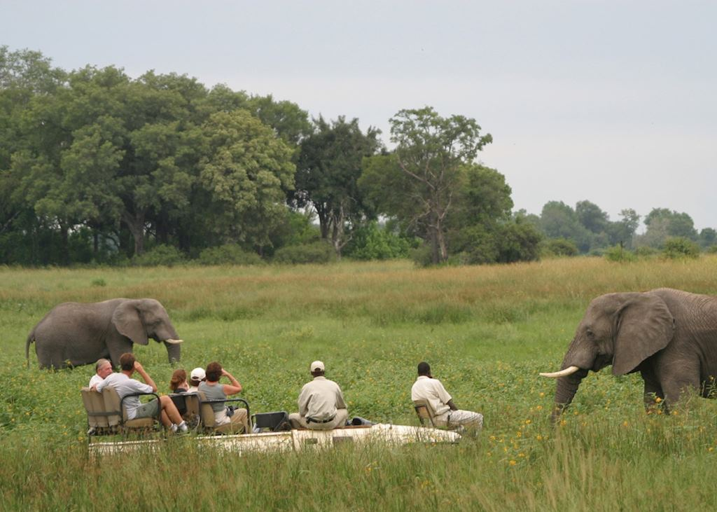 Game drive in the Kwara Concession