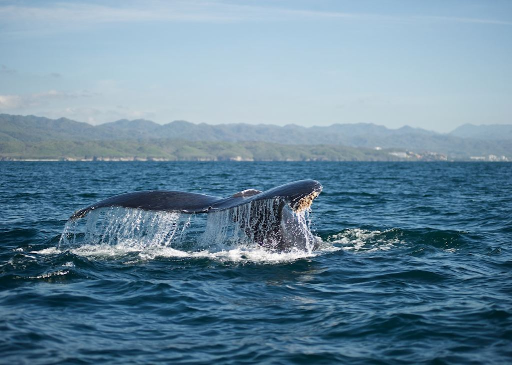 Whale, Mexico