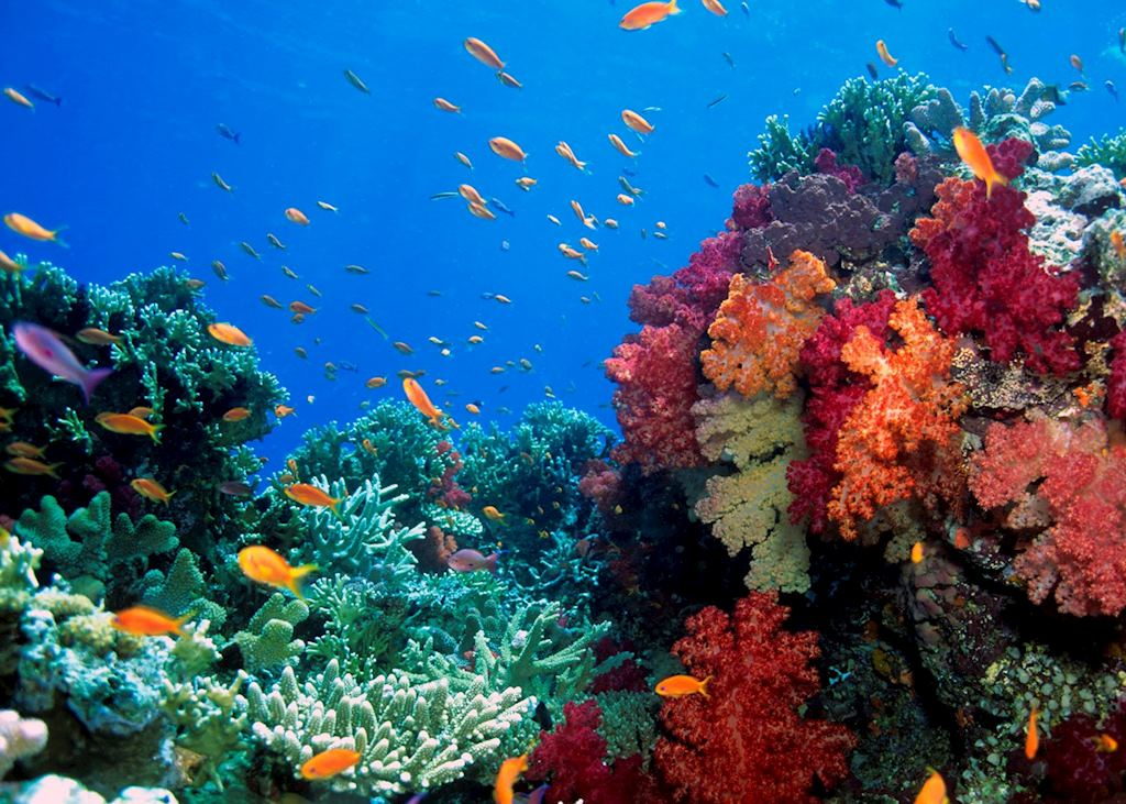 French Polynesia coral reef