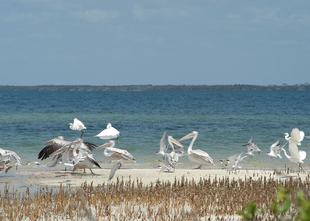 Pelicans & egrets on the Watamu coast
