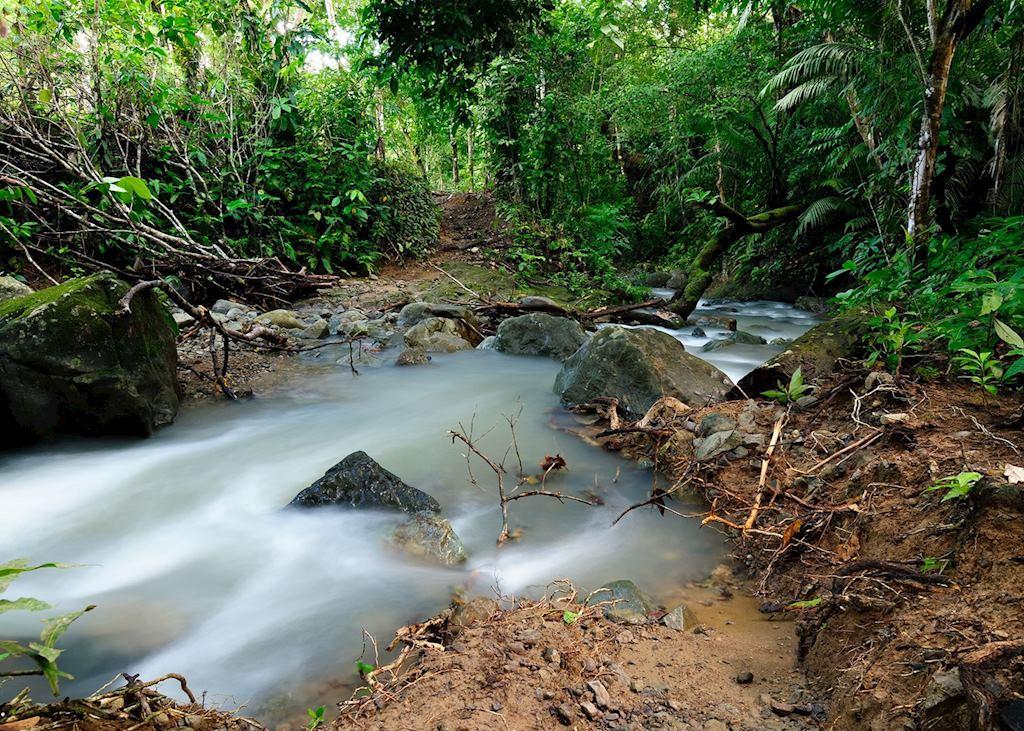 Darien jungle, Panama