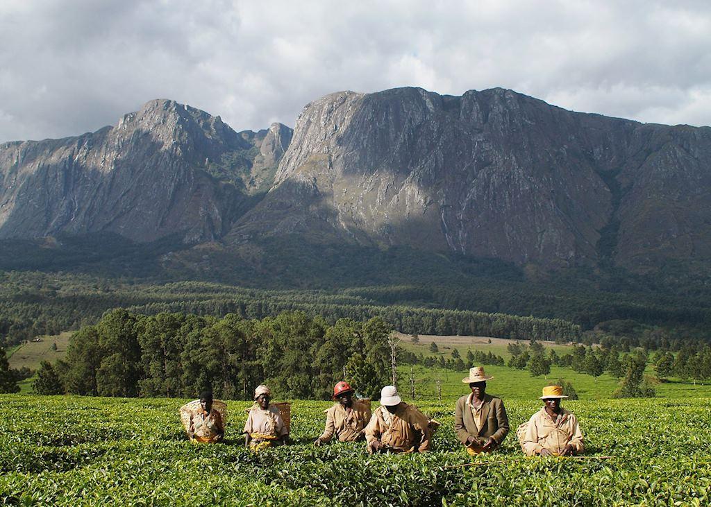 Thyolo Region, Malawi