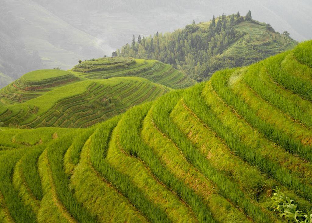 Longji, China