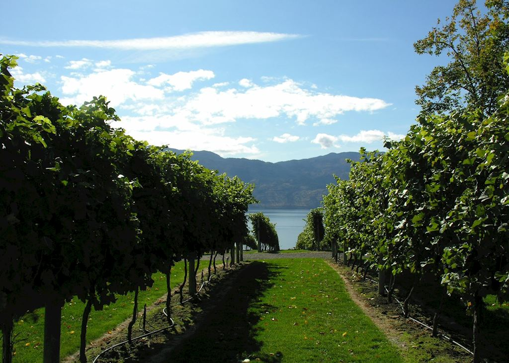 Vineyards, Kelowna, Canada