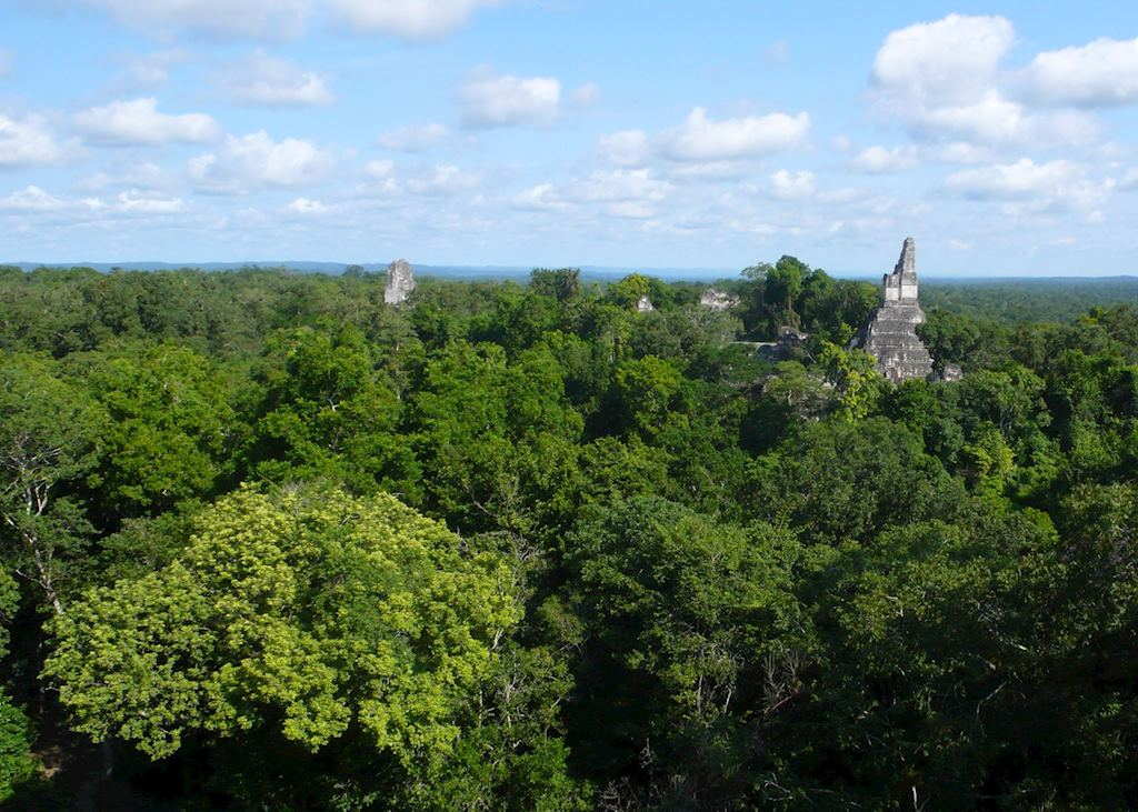 Canopy view of Tikal