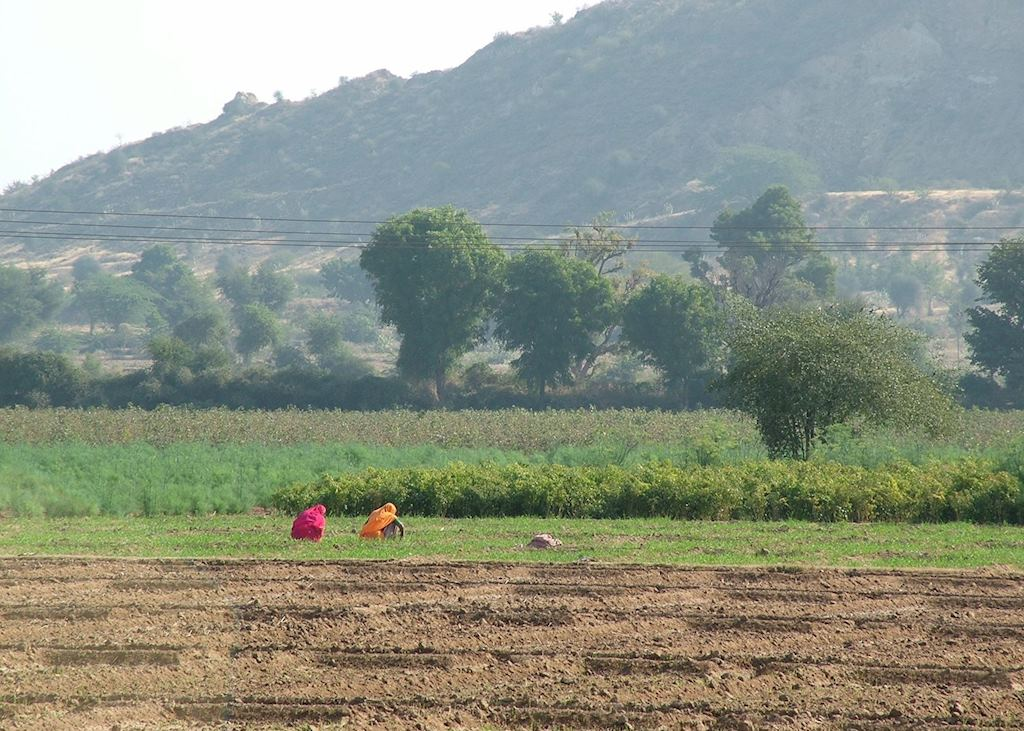 Farmland, Chhatra Sagar