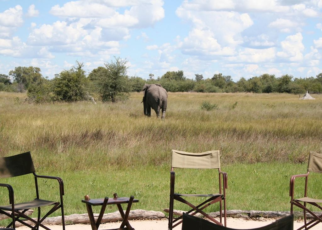 Elephant at Motswiri Lodge, Ghanzi & The Kanana Wilderness