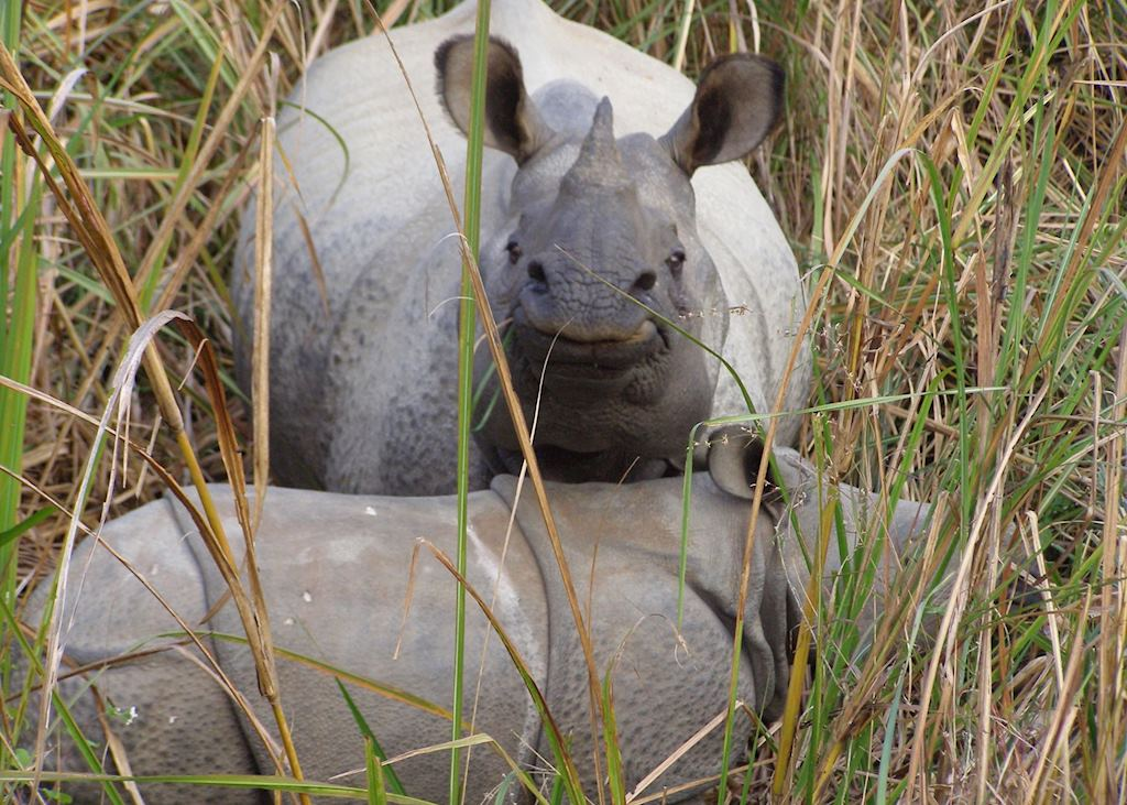 One horned rhino, Bardia National Park, Nepal