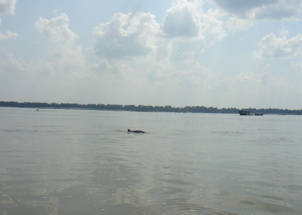 Irawaddy dolphin, Kratie