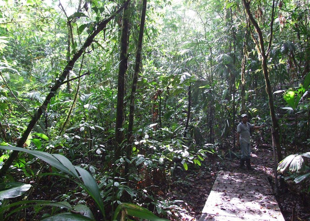 Walking in the Indio Maiz Biological Reserve
