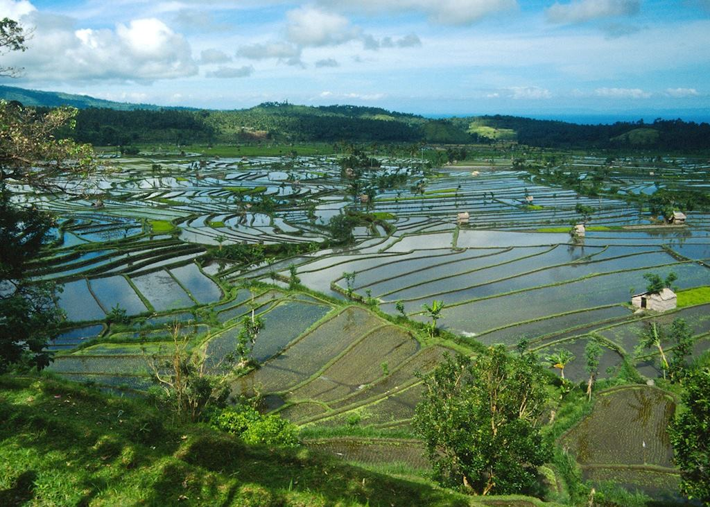 Paddy fields, Bali, Indonesia