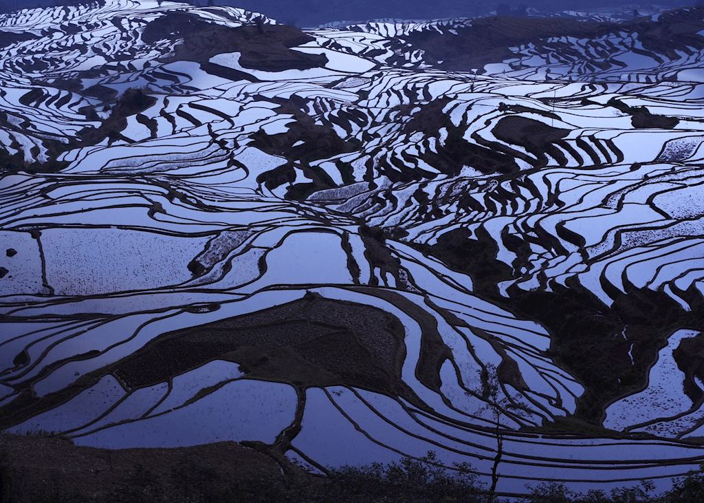 Rice Terraces, Yuanyang