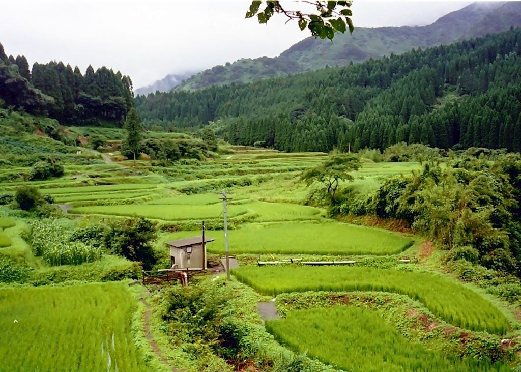 Rice paddies in the caldera of South Aso
