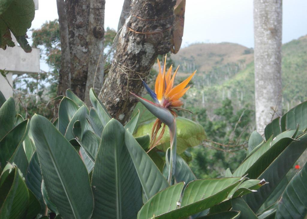 Soroa Orchid Garden, Near Las Terrazas