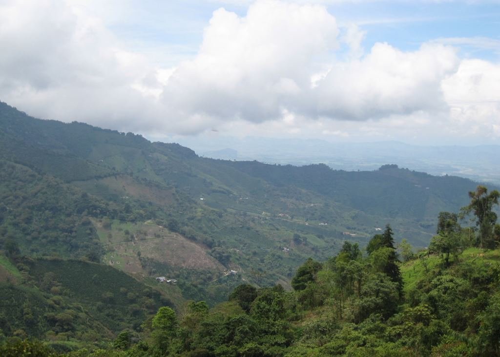 Views over the coffee region